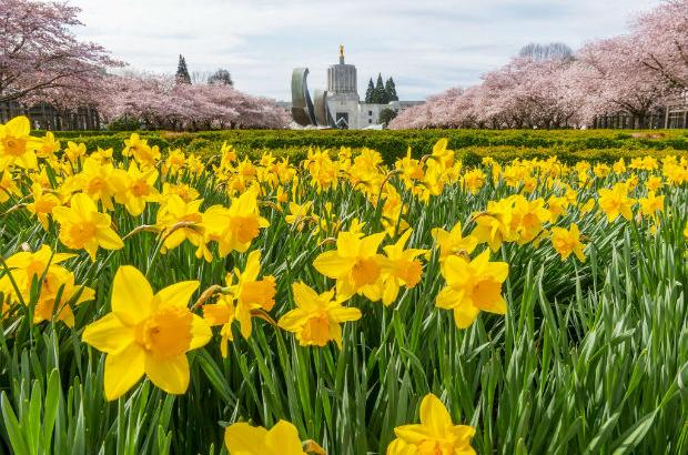 Oregon Capitol in springtime