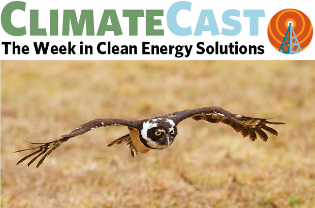 ClimateCast logo over owl in flight