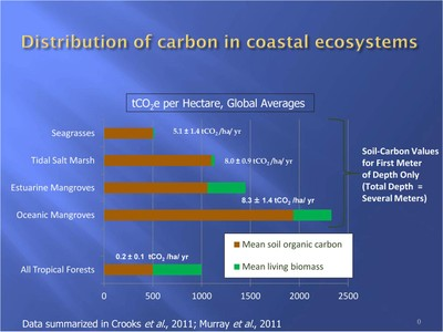Distribution of blue carbon