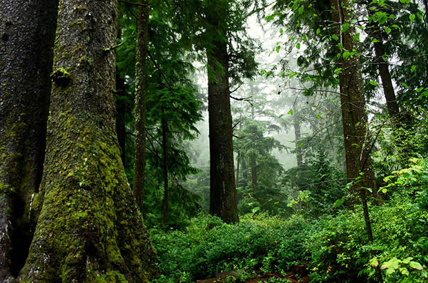 Old Growth Forest, Oswald West State Park, Oregon. Photo by David Patte/U.S. Fish and Wildlife Service