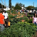 Pierce Co Tacoma Community Gardens Program NBI