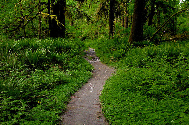 Quinault Trail - Olympic National Forest
