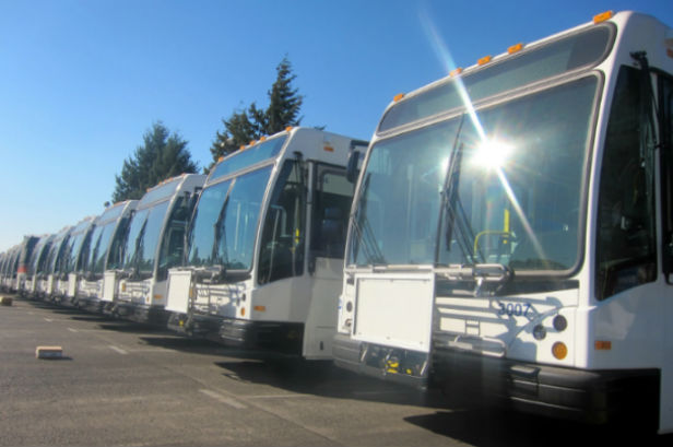 TriMet buses in the sun