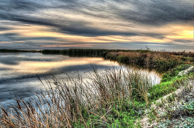 Coastal Wetland - Ormond Beach, Oxnard, CA